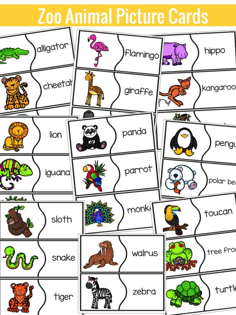 Zoo Animals Activity And Video Education To The Core