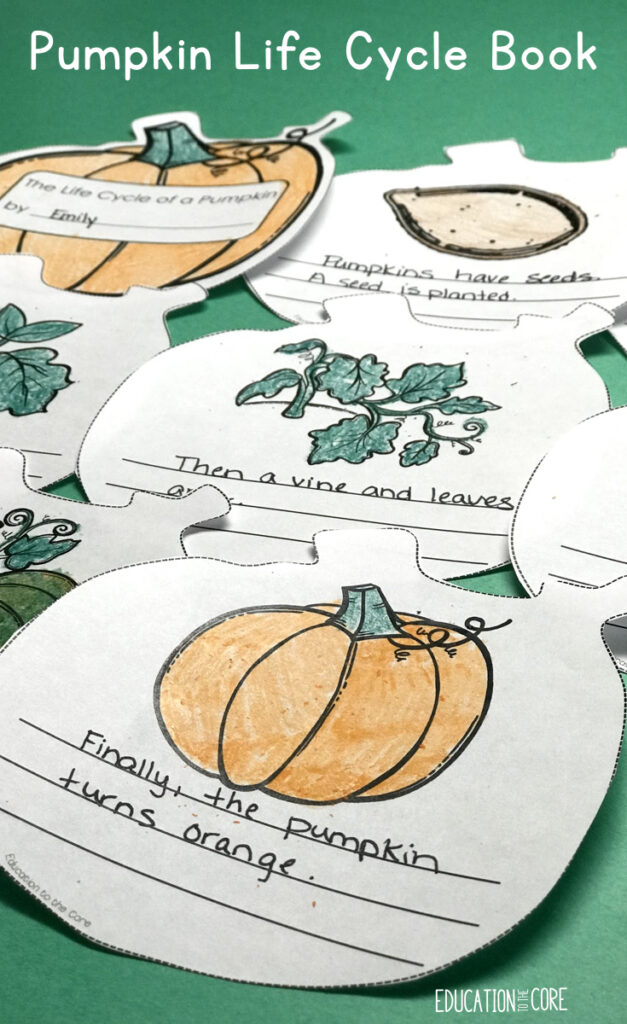 This has always been a favorite activity for my kiddos.  They really like making a book the shape of a pumpkin.  This is great for a better understanding of the Pumpkin Life Cycle and solidifying vocabulary.