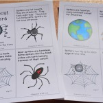 Spiders: A FREE Mini-Book and Writing Reflection