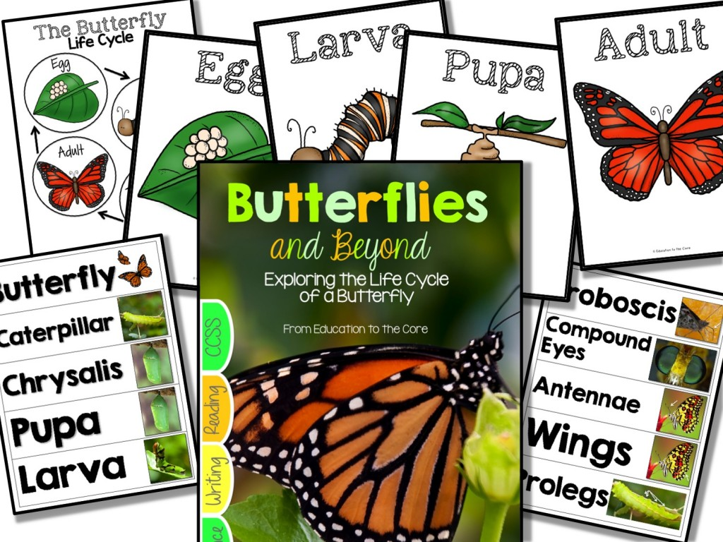 Butterfly Life Cycle Unit with Freebie!