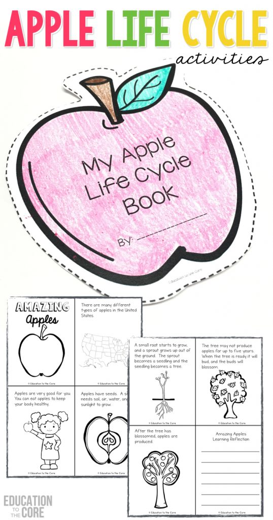 graphic regarding Apple Life Cycle Printable named A 7 days Jam Packed with Apple Lifetime Cycle Pleasurable! - Instruction in direction of