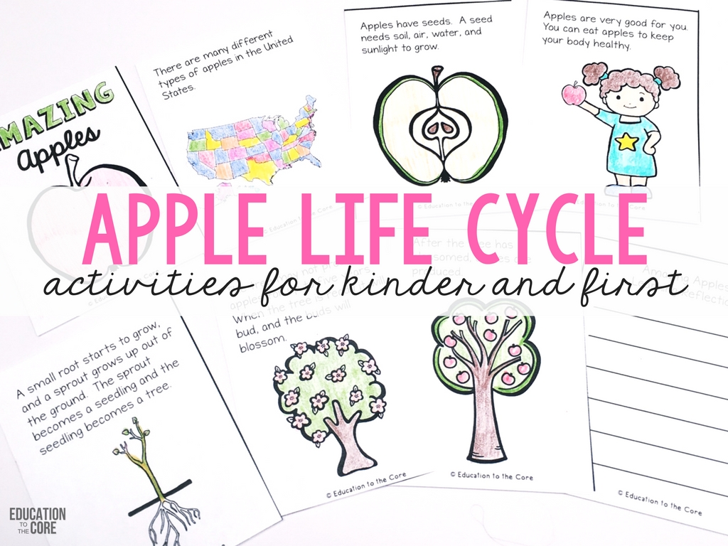 photograph relating to Apple Life Cycle Printable named A 7 days Jam Packed with Apple Existence Cycle Exciting! - Instruction in the direction of