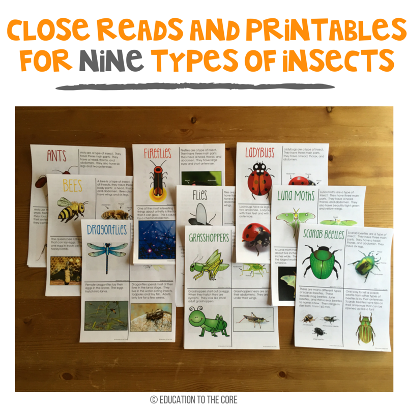 Close Reads and Printables for Nine Types of Insects