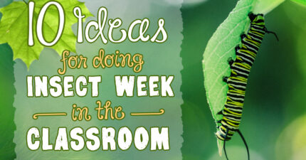 10 Ideas for Doing Insect Week in the Classroom
