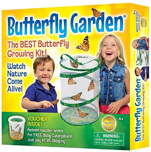 Watching caterpillars build cocoons and become butterflies will entertain the kids